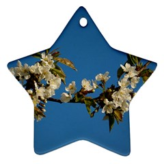 Cherry Blossom Star Ornament (Two Sides)