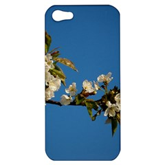 Cherry Blossom Apple iPhone 5 Hardshell Case