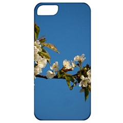 Cherry Blossom Apple Iphone 5 Classic Hardshell Case
