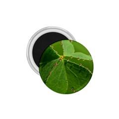 Drops 1 75  Button Magnet