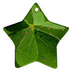 Drops Star Ornament