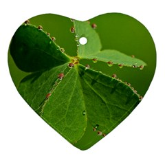 Drops Heart Ornament (Two Sides)