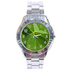 Drops Stainless Steel Watch (men s)