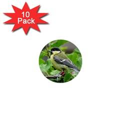 Songbird 1  Mini Button (10 Pack)