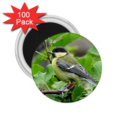 Songbird 2 25  Button Magnet (100 Pack)