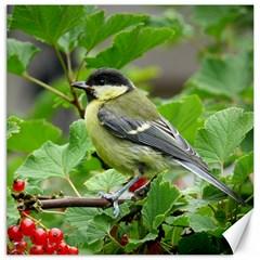 Songbird Canvas 12  X 12  (unframed)