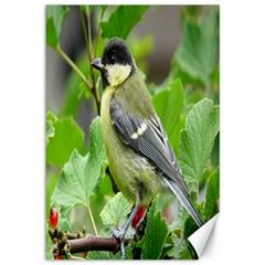 Songbird Canvas 12  X 18  (unframed)