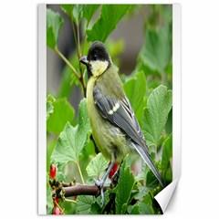 Songbird Canvas 20  X 30  (unframed)