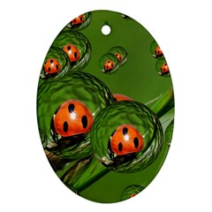 Ladybird Oval Ornament