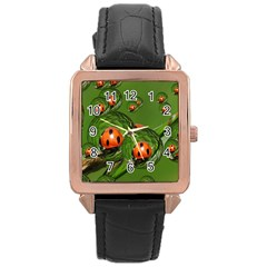 Ladybird Rose Gold Leather Watch