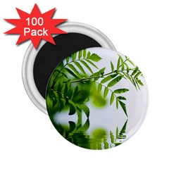 Leafs With Waterreflection 2 25  Button Magnet (100 Pack)