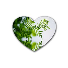 Leafs With Waterreflection Drink Coasters 4 Pack (heart)