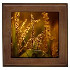 Field Framed Ceramic Tile