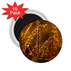 Field 2.25  Button Magnet (10 pack)