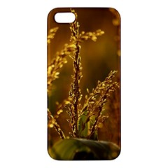 Field iPhone 5S Premium Hardshell Case