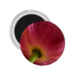 Poppy 2 25  Button Magnet