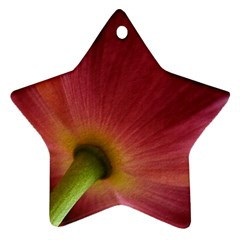 Poppy Star Ornament