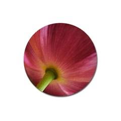 Poppy Magnet 3  (round)