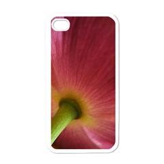 Poppy Apple iPhone 4 Case (White)