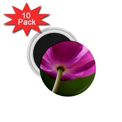 Poppy 1.75  Button Magnet (10 pack)