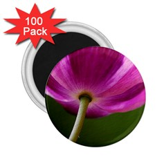 Poppy 2 25  Button Magnet (100 Pack)