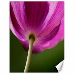 Poppy Canvas 12  X 16  (unframed)