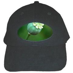 Poppy Capsules Black Baseball Cap