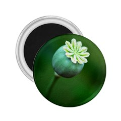 Poppy Capsules 2 25  Button Magnet