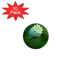 Poppy Capsules 1  Mini Button Magnet (10 pack)