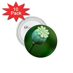 Poppy Capsules 1.75  Button (10 pack)