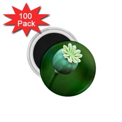 Poppy Capsules 1.75  Button Magnet (100 pack)