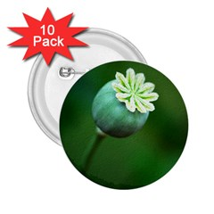 Poppy Capsules 2.25  Button (10 pack)