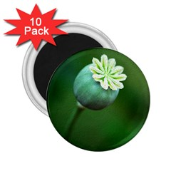 Poppy Capsules 2.25  Button Magnet (10 pack)