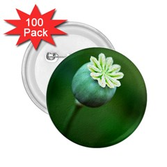 Poppy Capsules 2.25  Button (100 pack)