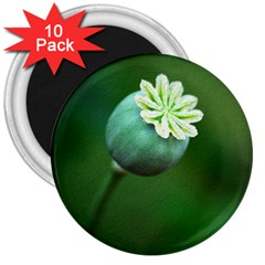 Poppy Capsules 3  Button Magnet (10 pack)