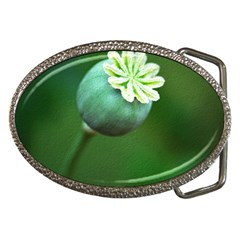 Poppy Capsules Belt Buckle (Oval)