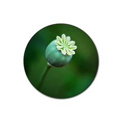 Poppy Capsules Drink Coasters 4 Pack (Round)