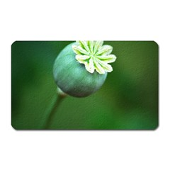 Poppy Capsules Magnet (Rectangular)