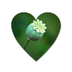 Poppy Capsules Magnet (Heart)