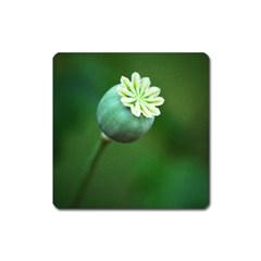 Poppy Capsules Magnet (square)
