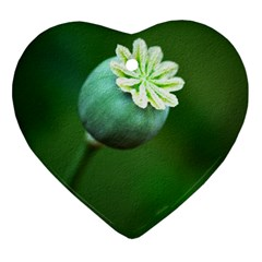 Poppy Capsules Heart Ornament (Two Sides)