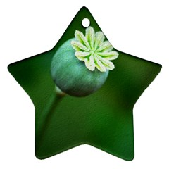 Poppy Capsules Star Ornament (Two Sides)