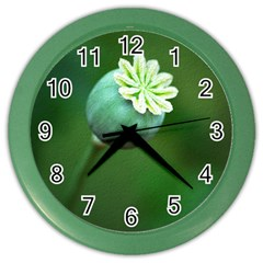 Poppy Capsules Wall Clock (Color)