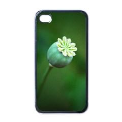 Poppy Capsules Apple Iphone 4 Case (black)