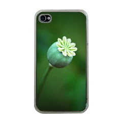 Poppy Capsules Apple iPhone 4 Case (Clear)