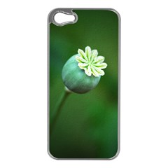 Poppy Capsules Apple iPhone 5 Case (Silver)