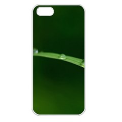 Pearls   Apple Iphone 5 Seamless Case (white)