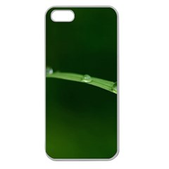 Pearls   Apple Seamless iPhone 5 Case (Clear)