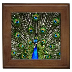 Peacock Framed Ceramic Tile
