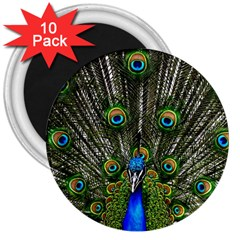 Peacock 3  Button Magnet (10 pack)